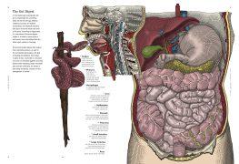 Lien Disease 1b